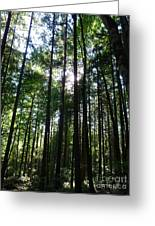 Forest Light Greeting Card