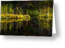 131005b-044 Forest Marsh 1 Greeting Card