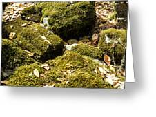Forest Moss Greeting Card