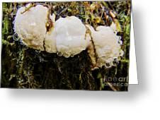 Forest Mushroom Trio Greeting Card