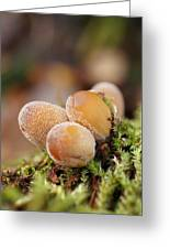 Forest Mushrooms Greeting Card