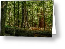 Forest Of Cathedral Grove Collection 1 Greeting Card