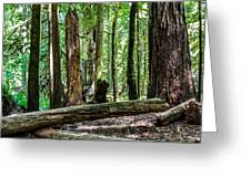 Forest Of Cathedral Grove Collection 2 Greeting Card