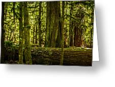 Forest Of Cathedral Grove Collection 3 Greeting Card