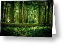 Forest Of Cathedral Grove Collection 7 Greeting Card