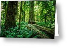 Forest Of Cathedral Grove Collection 8 Greeting Card