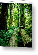 Forest Of Cathedral Grove Collection 9 Greeting Card