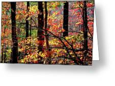 Color The Forest Greeting Card
