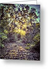 Forest Of Light Greeting Card