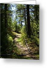 Forest Path In Spokane 2014 Greeting Card
