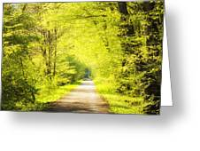 Forest Path In Spring With Bright Green Trees Greeting Card