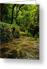 Forest Path Greeting Card