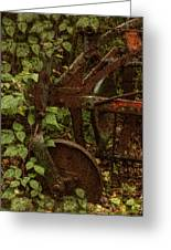 Forest Reclaimed Greeting Card by Jack Zulli