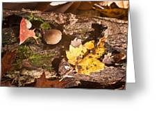 Forest Scene 6 Greeting Card