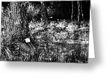 Forest Socket Greeting Card