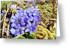 Forest Spring Concept Greeting Card