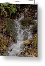 Forest Stream Cascade Greeting Card