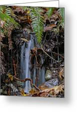 Forest Streamlet Greeting Card