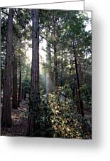 Forest Through The Trees Greeting Card