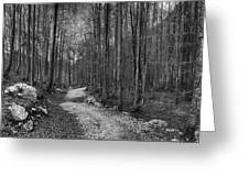 Forest Trail Bw Greeting Card