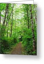 Forest Trail To Follow Greeting Card