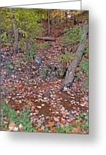 Forest Trickle Greeting Card