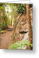 Forest Walk 15 Greeting Card