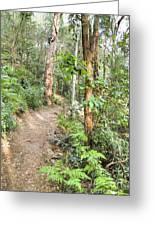 Forest Walk 17 Greeting Card