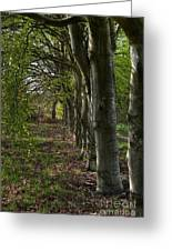 Forest Walk Hdr Greeting Card
