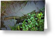 Forest Wetlands I Greeting Card