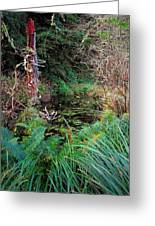 Forest Wetlands II Greeting Card
