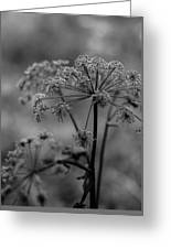 Forest Wild Flowers Greeting Card