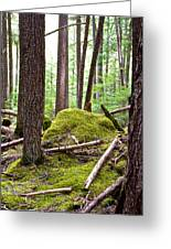 Forest With Moss-covered Rocks Along John's Lake Trail In Glacier Np-mt Greeting Card