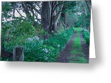 Forested Path Greeting Card