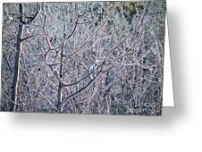 Forests Of Frost Greeting Card