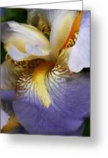 Forever Iris  Greeting Card