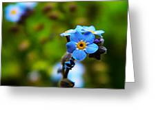 Forget Me Not Bloom Greeting Card