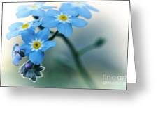 Forget Me Not Greeting Card by Simona Ghidini