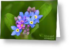 Forget-me-not Stylized Greeting Card