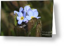 Forget Me Nots Springtime Greeting Card