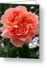Formidable Bloom Greeting Card