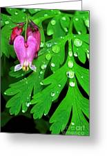 Formosa Bleeding Heart On Ferns Greeting Card