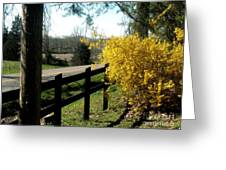 Forsythia Along The Highway Greeting Card