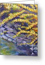 Forsythia Creek Greeting Card