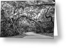 Fort Clinch Live Oaks Greeting Card