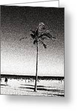 Fort Lauderdale Palm Tree Greeting Card