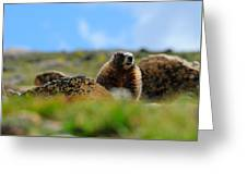 Fort Marmot Greeting Card