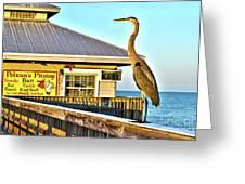 Fort Myers Beach Bird On Pier Greeting Card