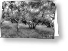 Fort Ord Ca Oaks Greeting Card