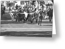 Fort Worth Herd Cattle Drive Greeting Card